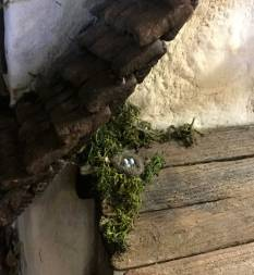 a nest tucked in a quiet spot on the porch roof