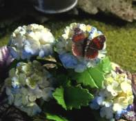Lola's Original fimo butterfly
